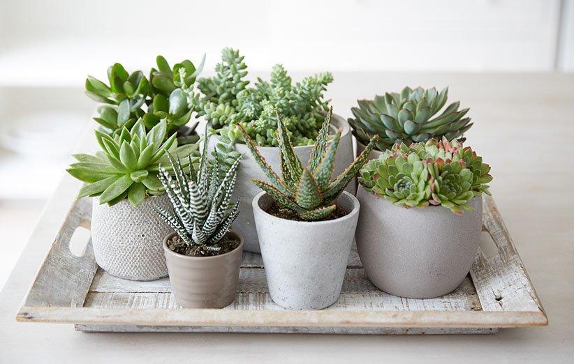 فواید نگهداری گل و گیاه