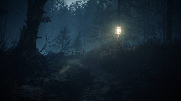 جنگل در مدیوم