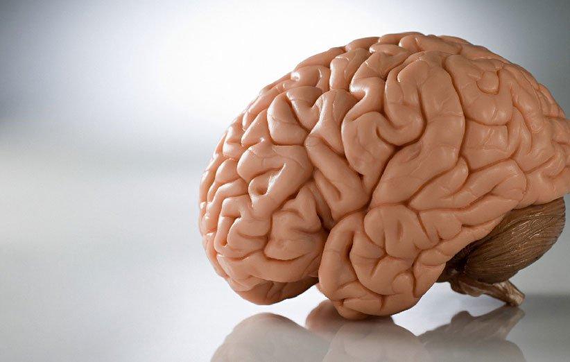 تقویت سلامت مغز از خواص ماهی سالمون
