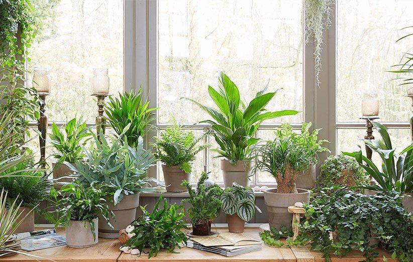 گیاهان آپارتمانی و تغییرات دما