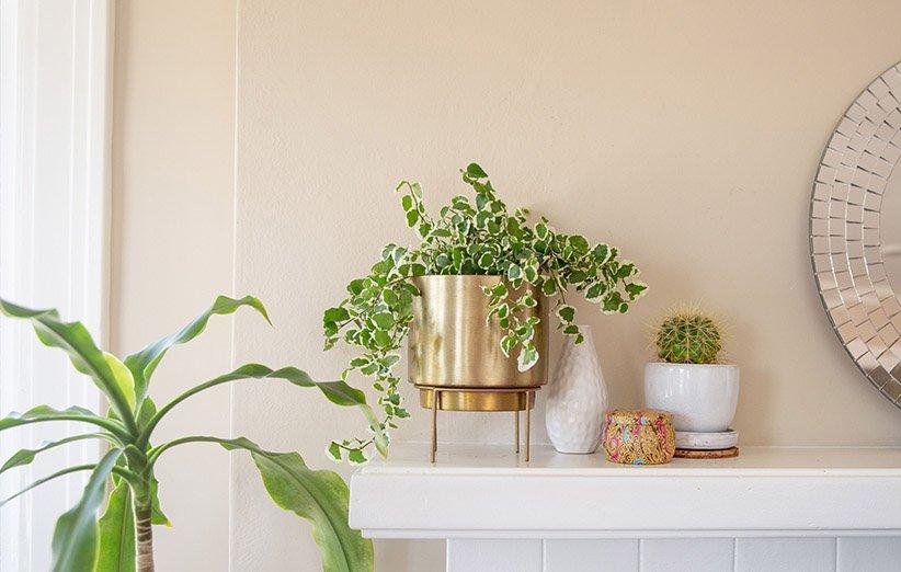 تغییرات دمایی در گیاهان آپارتمانی