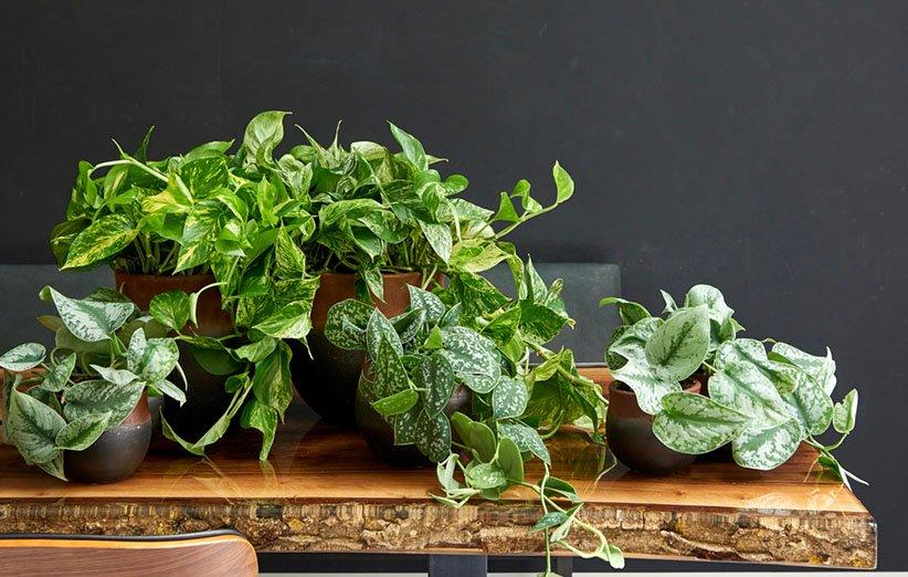 گیاهان آپارتمانی و تغییرات دما و آبوهوا در فصول مختلف