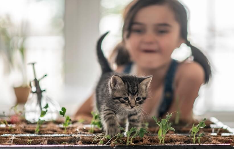 گیاه آپارتمانی خطرناک و سمی برای کودکان و حیوانات