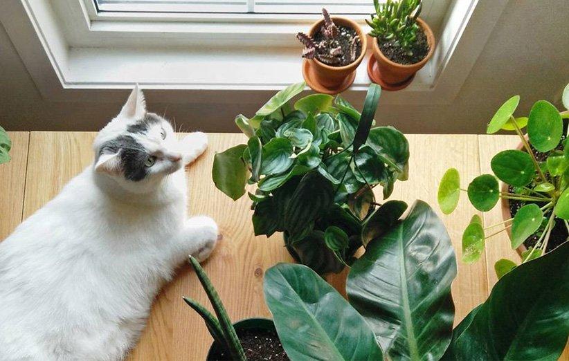 گیاه آپارتمانی سمی