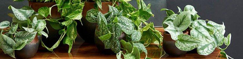 چگونه گیاهان آپارتمانی را برای تغییر دما در فصلهای مختلف آماده کنیم؟
