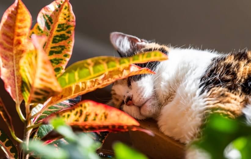 گیاه آپارتمانی خطرناک - راههای مسموم شدن با گیاهان