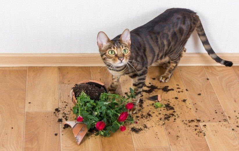 حیوانات خانگی و بازی با گیاهان
