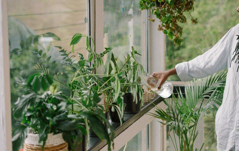 آب دادن به گیاهان آپارتمانی