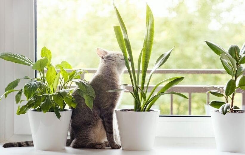 گیاه آپارتمانی خطرناک و نکات ایمنی