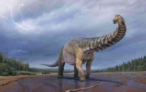 طرحی گرافیکی از دایناسور غولپیکر استرالوتایتان کوپرنسیس در استرالیا