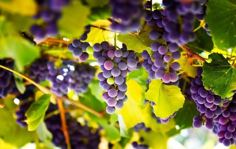 12 خاصیت باورنکردنی انگور که نمیدانستید