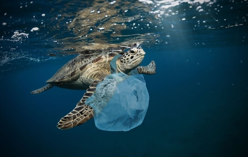کشته شدن حیوانات و آبزیان با کیسههای پلاستیکی