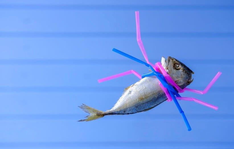 غذای دریایی آلوده به پلاستیک میخوریم