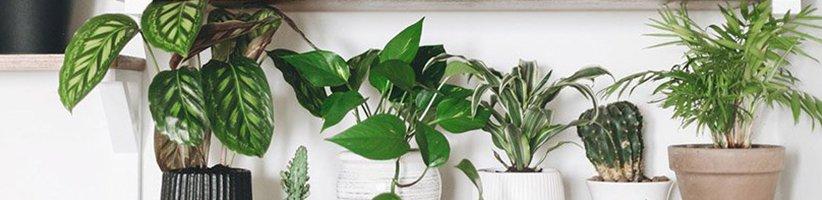 چگونه وقتی به سفر میروید از خشک شدن گیاهان آپارتمانی عزیزتان جلوگیری کنید؟