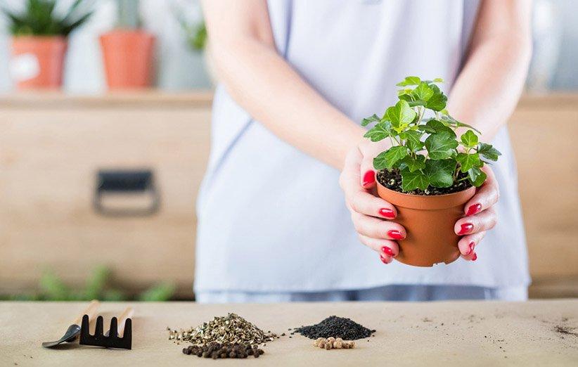 مراقبت از گیاهان آپارتمانی در سفر