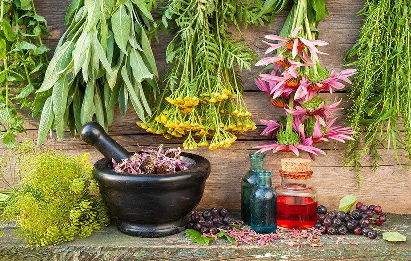 گیاهان دارویی برای تعادل هورمونی