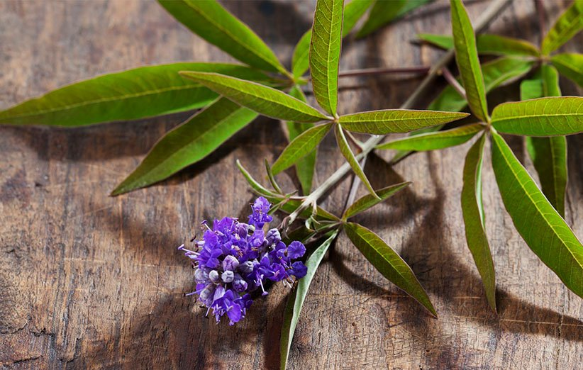 گیاه پنج انگشت برای تعادل هورمونی