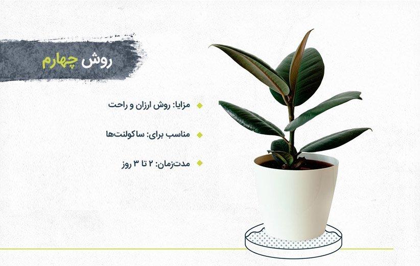 روشهای آبیاری گیاهان آپارتمانی