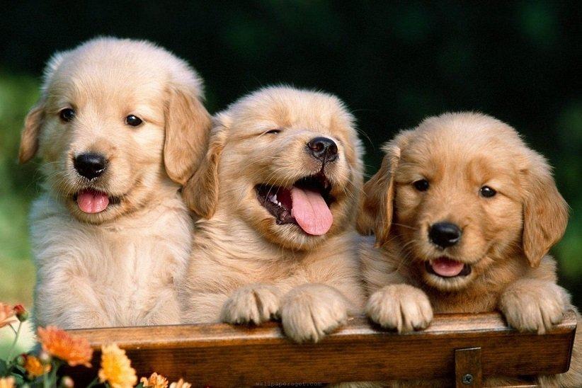 دیدن فیلم یا ویدیوهای مرتبط با حیوانات میتواند یکی از لذتبخشترین کارها باشد
