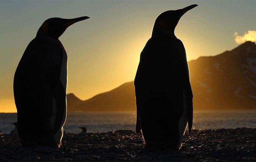 سیارهي یخزده. مستند طبیعت. ۲۰۱۱