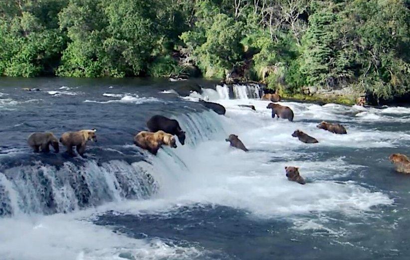 شگفتانگیزترین رویدادهای طبیعت. مستند طبیعت.۲۰۰۹