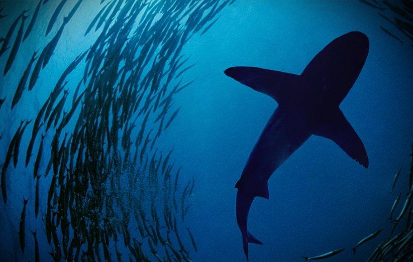 اقیانوس آرام وحشی. مستند طبیعت.۲۰۰۹