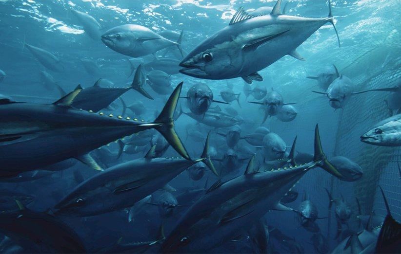 دریانوردی. مستند طبیعت. ۲۰۲۱