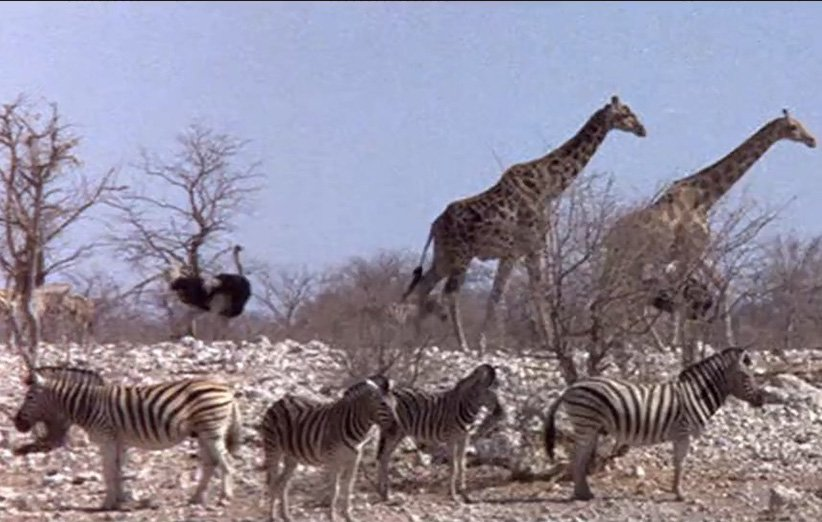 مردم زیبا.مستند طبیعت. ۱۹۷۴