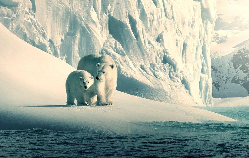 سیارهی ما. مستند طبیعت. ۲۰۱۹