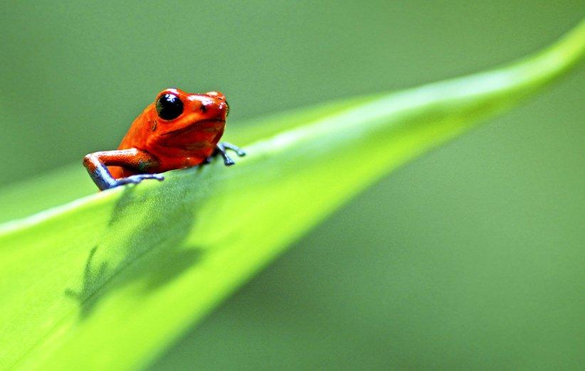 زندگی. مستند طبیعت. ۲۰۰۹