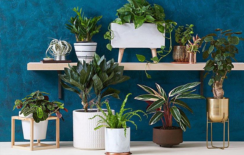 بهترین گیاهان آپارتمانی برای خانه