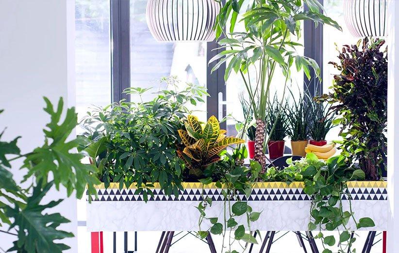 بهترین گیاهان آپارتمانی برای اتاق پرنور