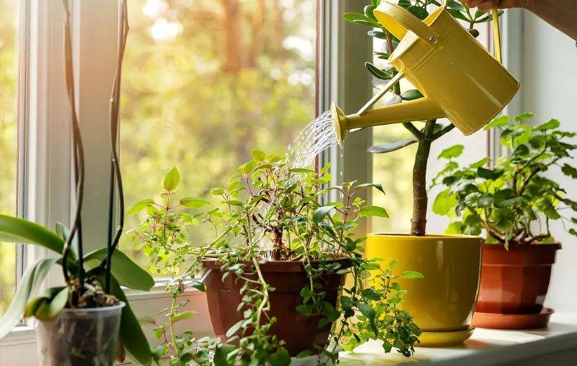 فواید گیاهان آپارتمانی