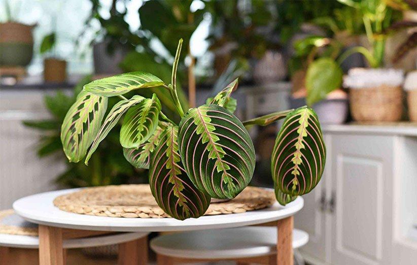 گیاهان آپارتمانی زیبا