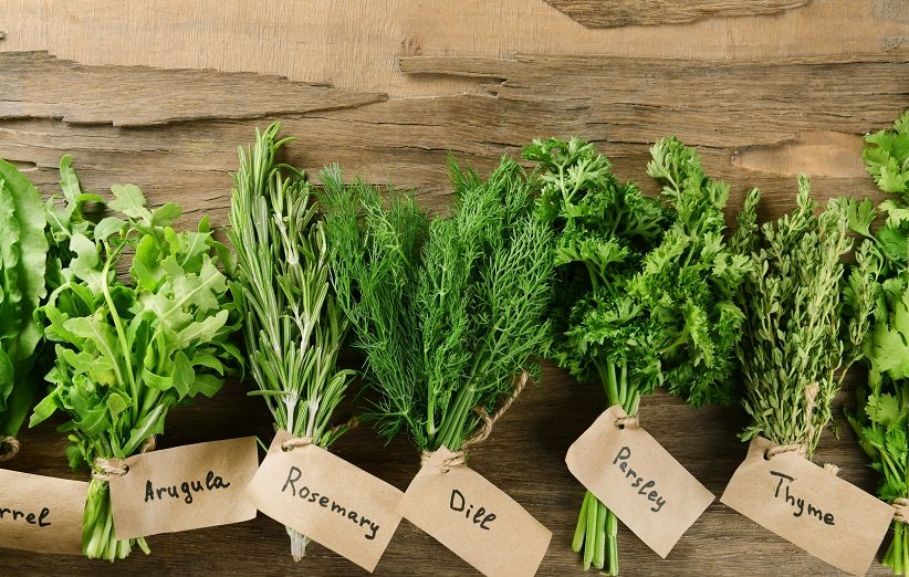 گیاهان مختلف برای درمان عفونت گوش